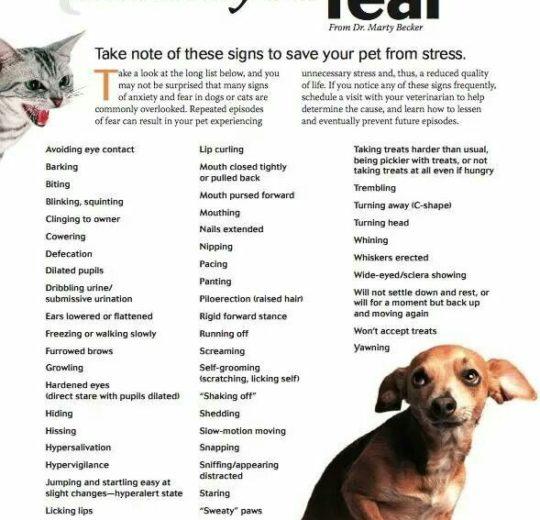 犬隻焦慮的發生與早期生活經驗和運動有關