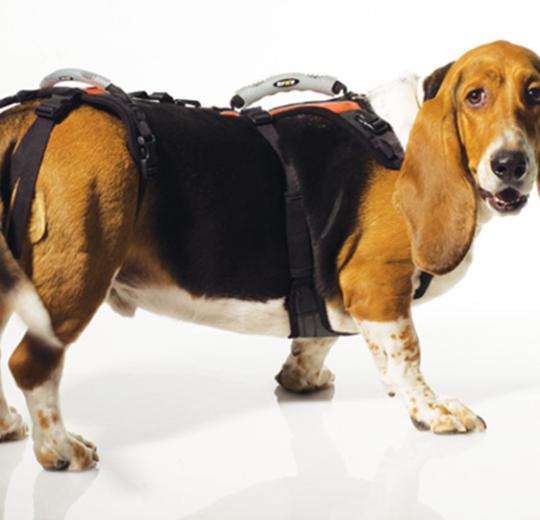犬隻復健用輔助胸臀背袋