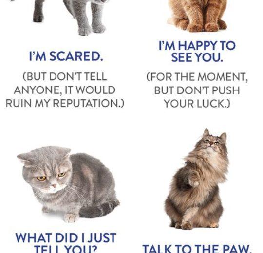 從日常的行為得知貓咪在默默的承受病痛