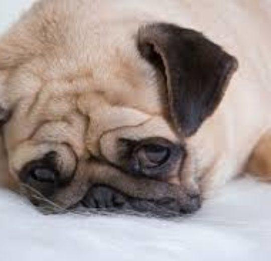 飼主的個性影響狗的個性,快樂的飼主與快樂的狗