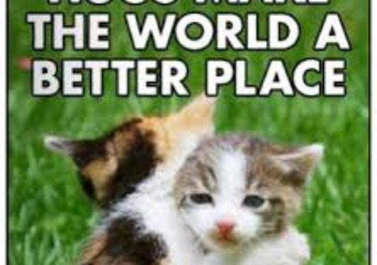 貓的退化性關節疾病,家人的照顧與關懷與止痛藥一樣有效