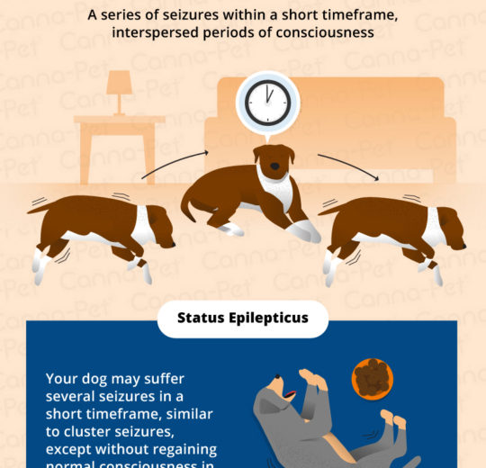 癲癇發作後,建議檢查心肌是否受傷