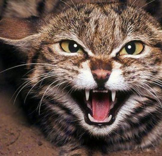 貓的五種性格