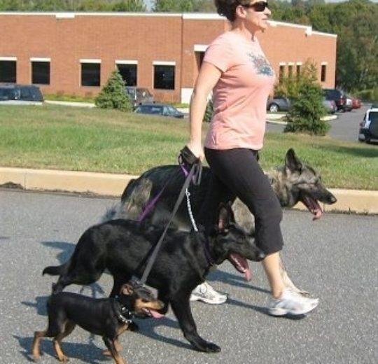 養狗可以降低飼主心臟病致死的風險